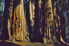 Im Wald der Giganten