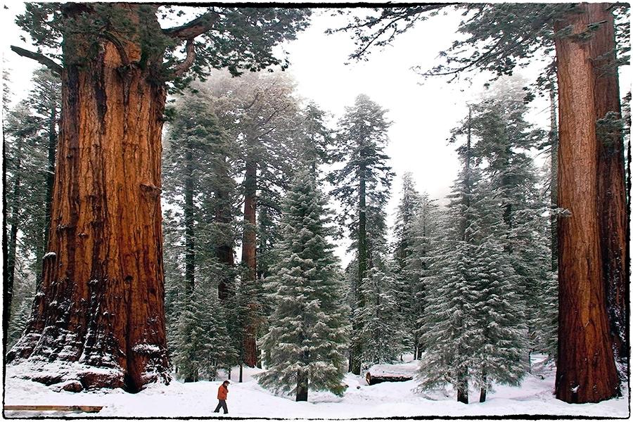 Im Wald der Riesen