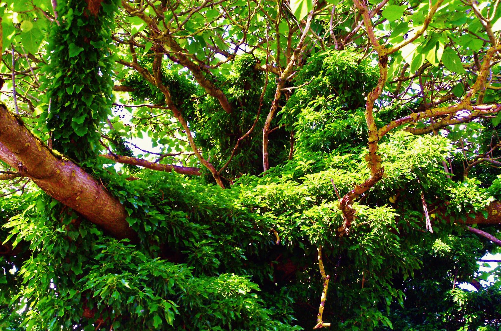 Im Wald des Vergessens