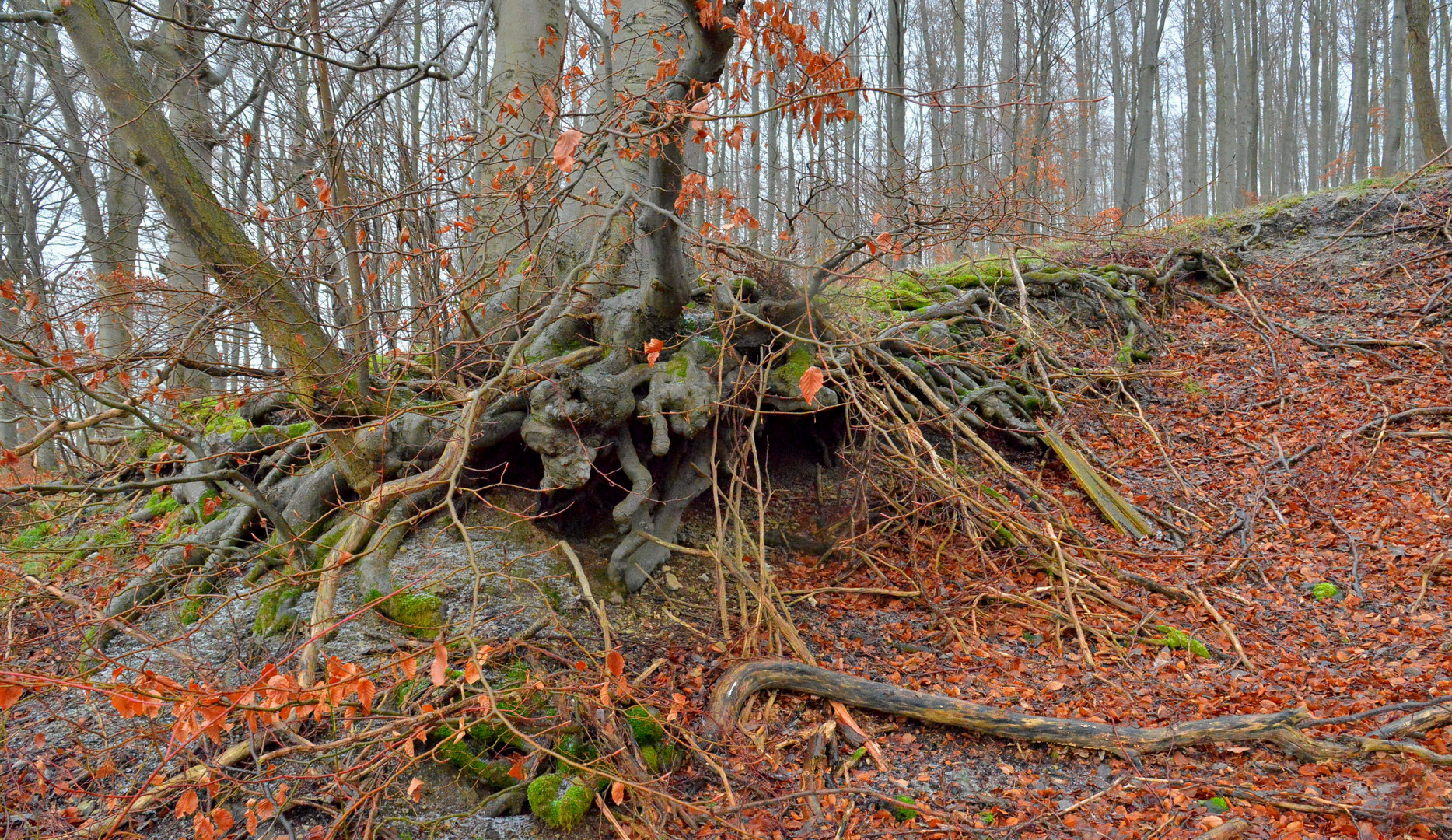 im Wald (en el bosque)