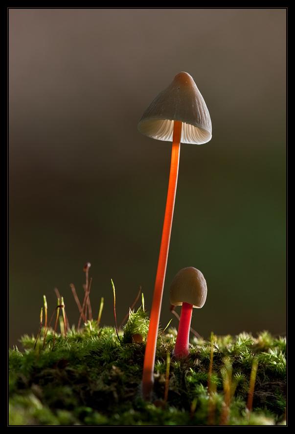 im Wald entdeckt