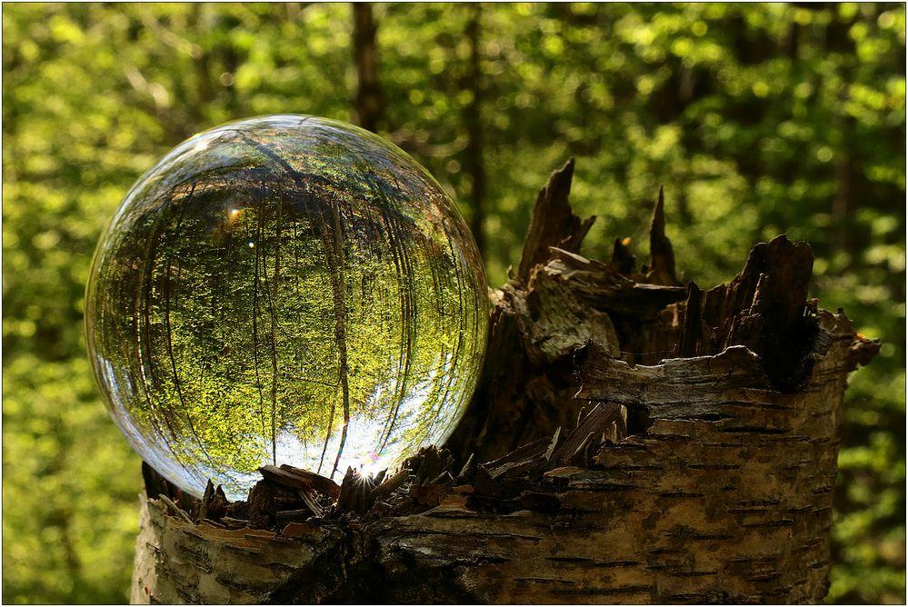 Im Wald gekugelt...