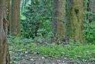 Im Wald - HDR-Focus Stacking