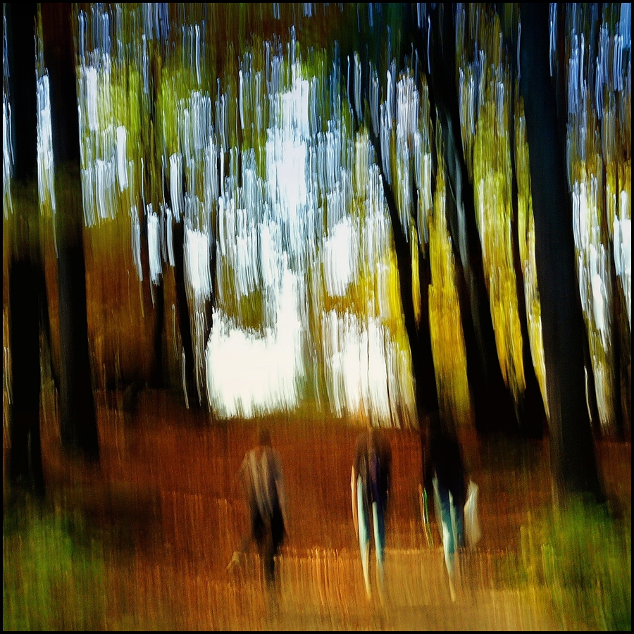 im Wald III