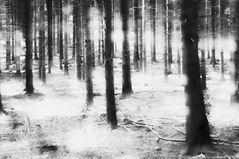 im Wald  ... oder Was der Wald sah