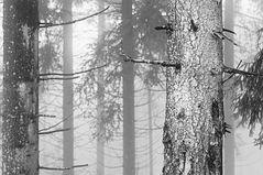 im Wald ... oder Was der Wald sah II