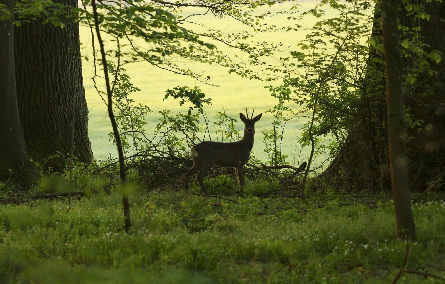 Im Wald und auf der Heide (3)