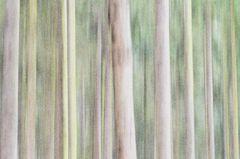 Im Wald von Banneux # 0981