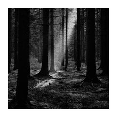 Im Wald von Banneux ( Belgien )