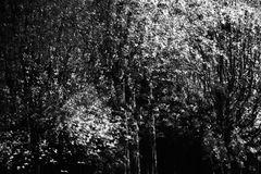 Im Wald von Banneux D71 8386