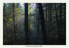 Im Wald von Schlierbach