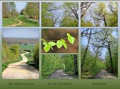im Wald wird es grün......