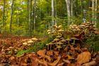 Im Wald zu Hause