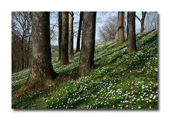 Im Walde, da blühen die Blümelein...