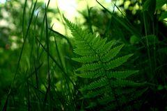 im Waldesgrund II