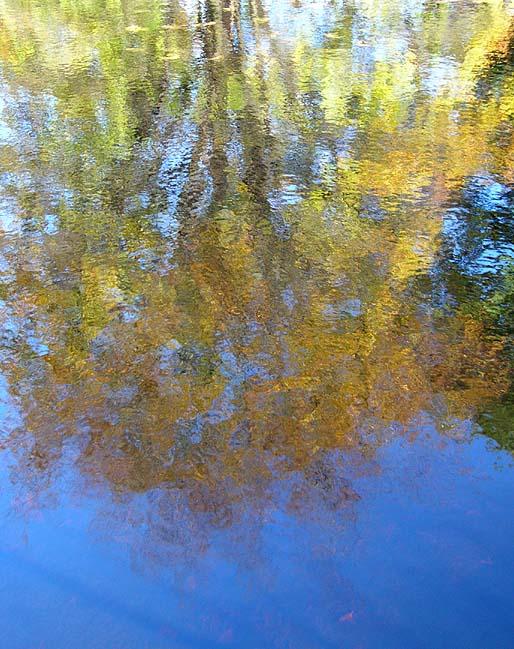 im Wasser gespiegelter Baum