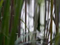 Im Wasserwald