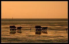 Im Watt vor Cuxhaven