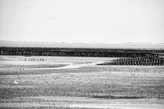 Im Wattenmeer