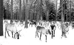 Im Weihnachtswald