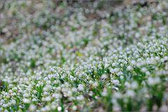 ~ im weißen Wald ~