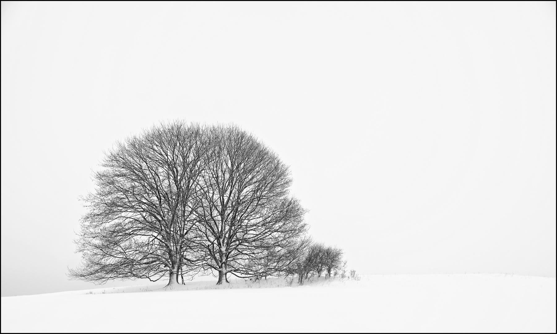 Im Westerwald. Im Winter. Im Schnee: Lindenpaar