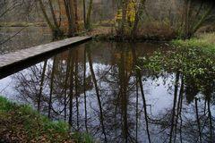 Im Wildecker Forst 2 (Hessen)