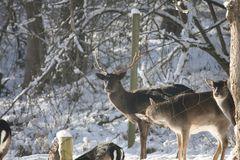 im Wildgehege als noch Schnee lag