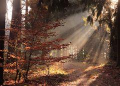 Im Wildwald