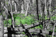 Im windbuschröschen Wald  # 9301
