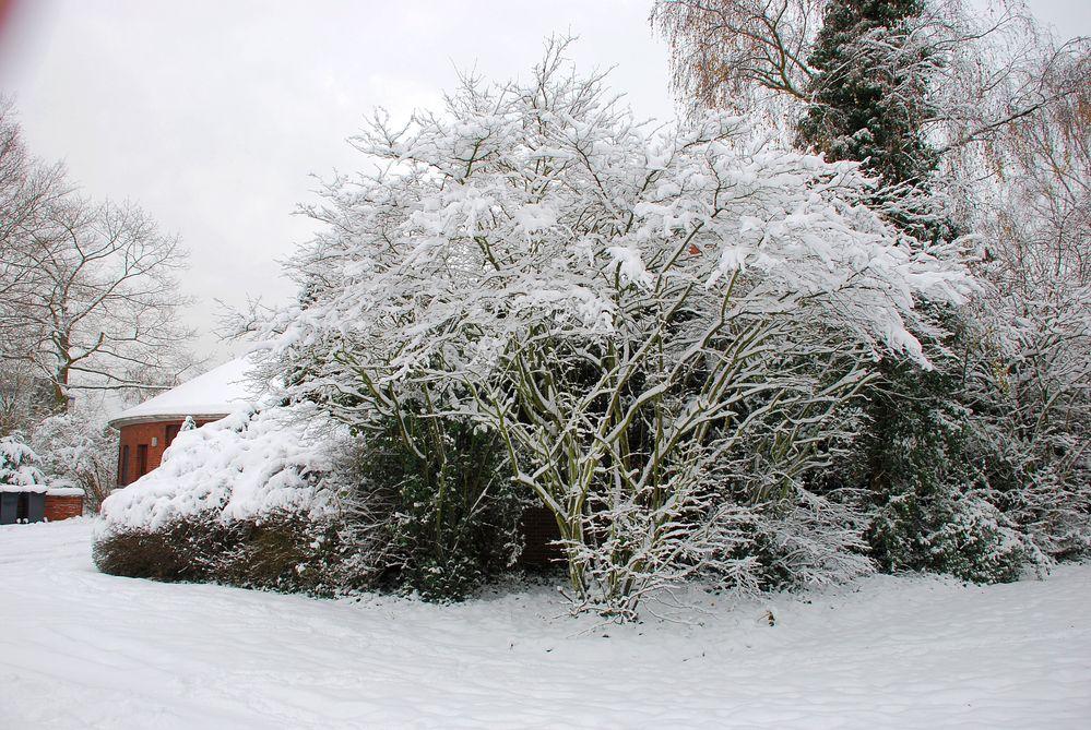 Im Winter 2