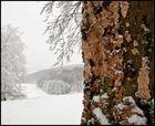 Im Winter