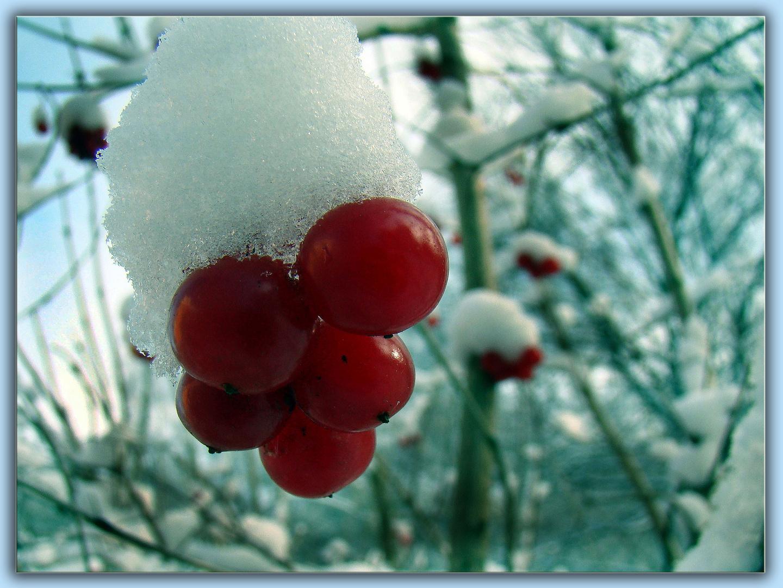 im winter gibt ....