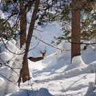 Im Winter ist das Leben hart... - La vie des animaux sauvages est difficile pendant l'hiver!