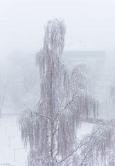 Im Winterkleid (1)