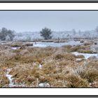 Im winterlichen Moor
