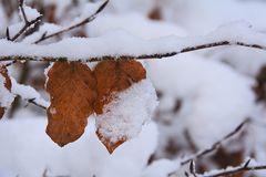 im Winterwald-7-