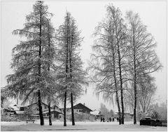 Im Winterwunderland (4)