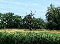 Im Wörlitzer Landschaftspark I