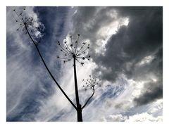 Im Wolkenlicht... I.