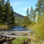 Im Yellowstone Nationalpark 002