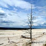 Im Yellowstone Nationalpark