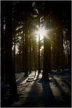 Im Zauberwald der Sonnentrolle