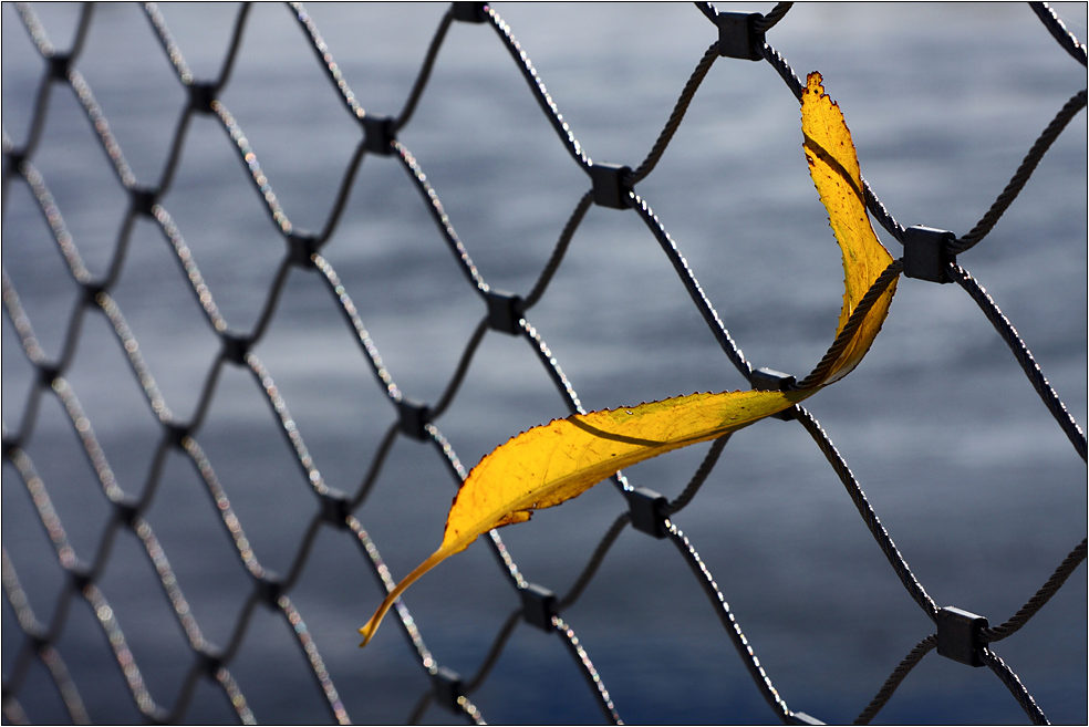 Im Zaun verfangen...