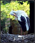 Im Zoo, koennte aber auch woanders sein ;)