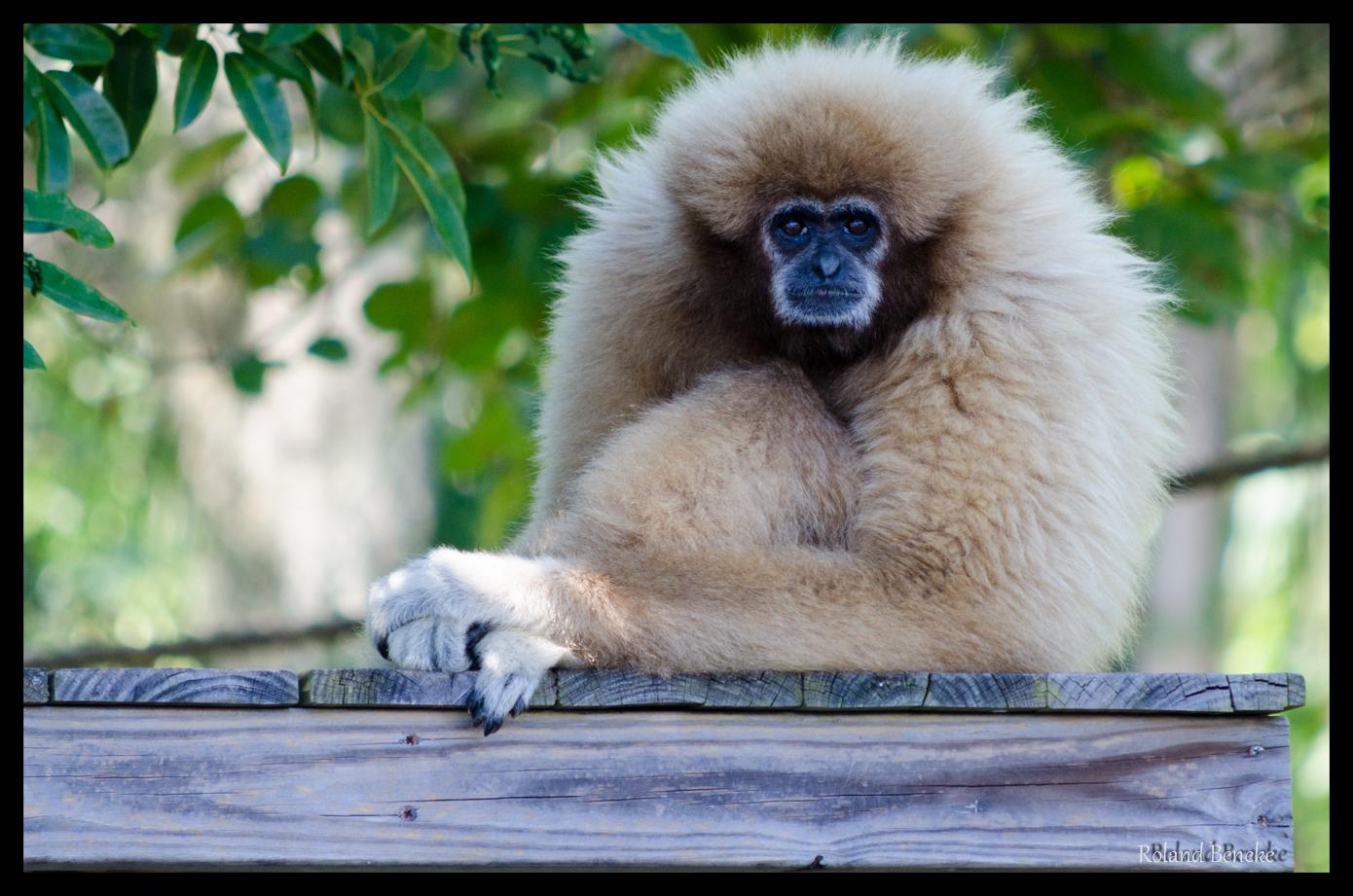 im Zoo; Naples, FL