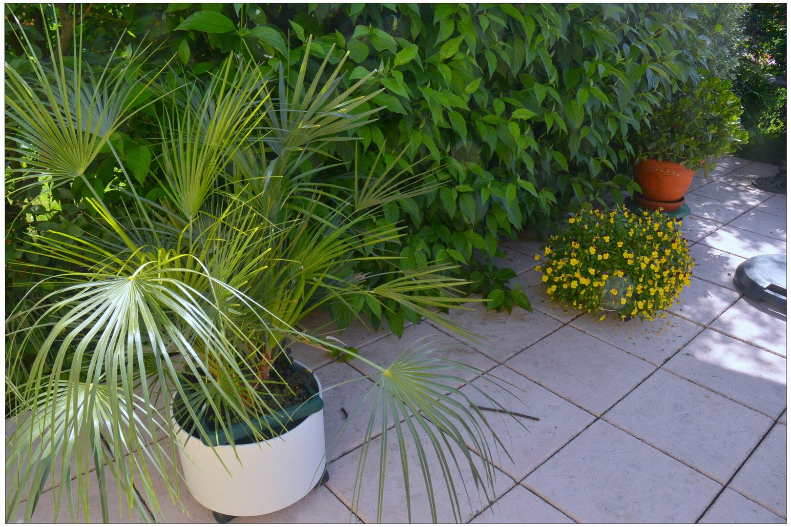 imagen de mi nueva cámara  III - un rincón de nuestra terraza