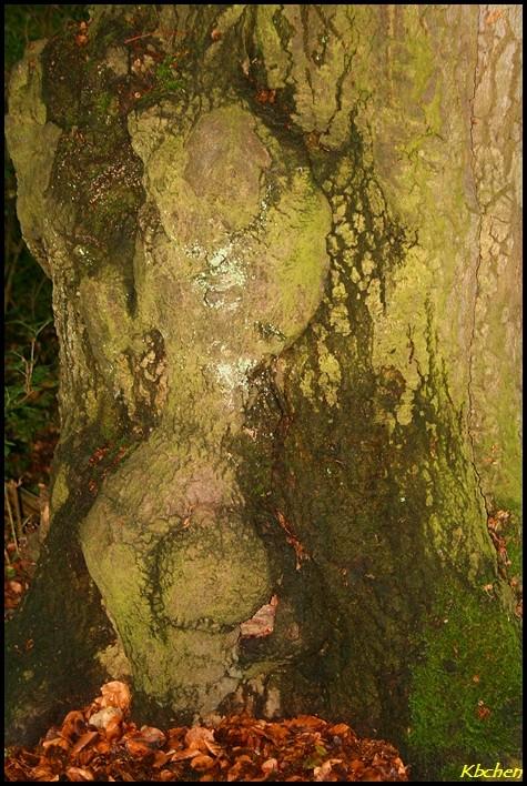 Im/Am Baum 2