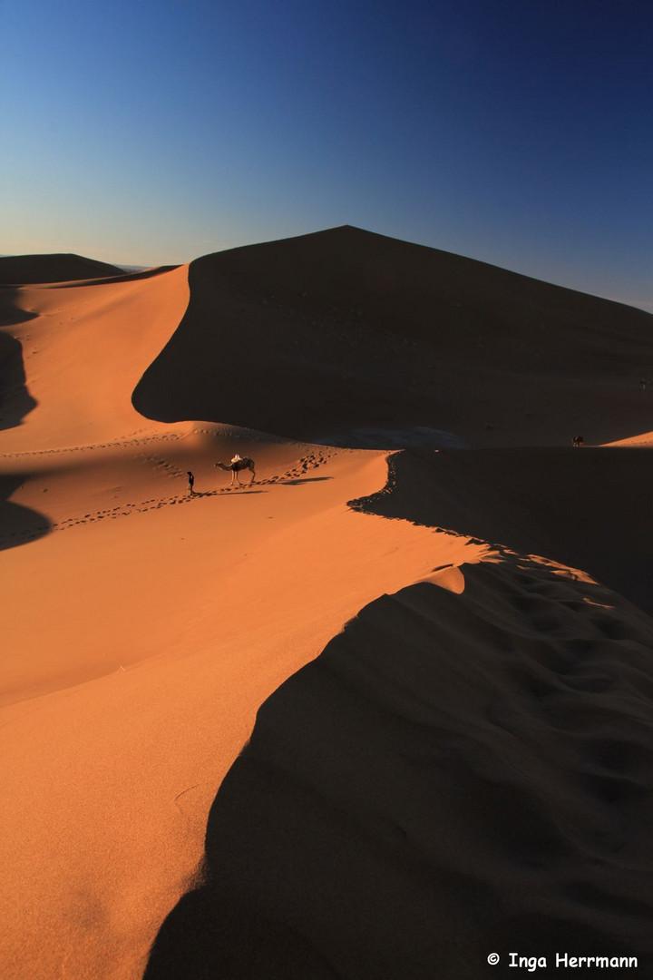 IMG_4432 - desert breath