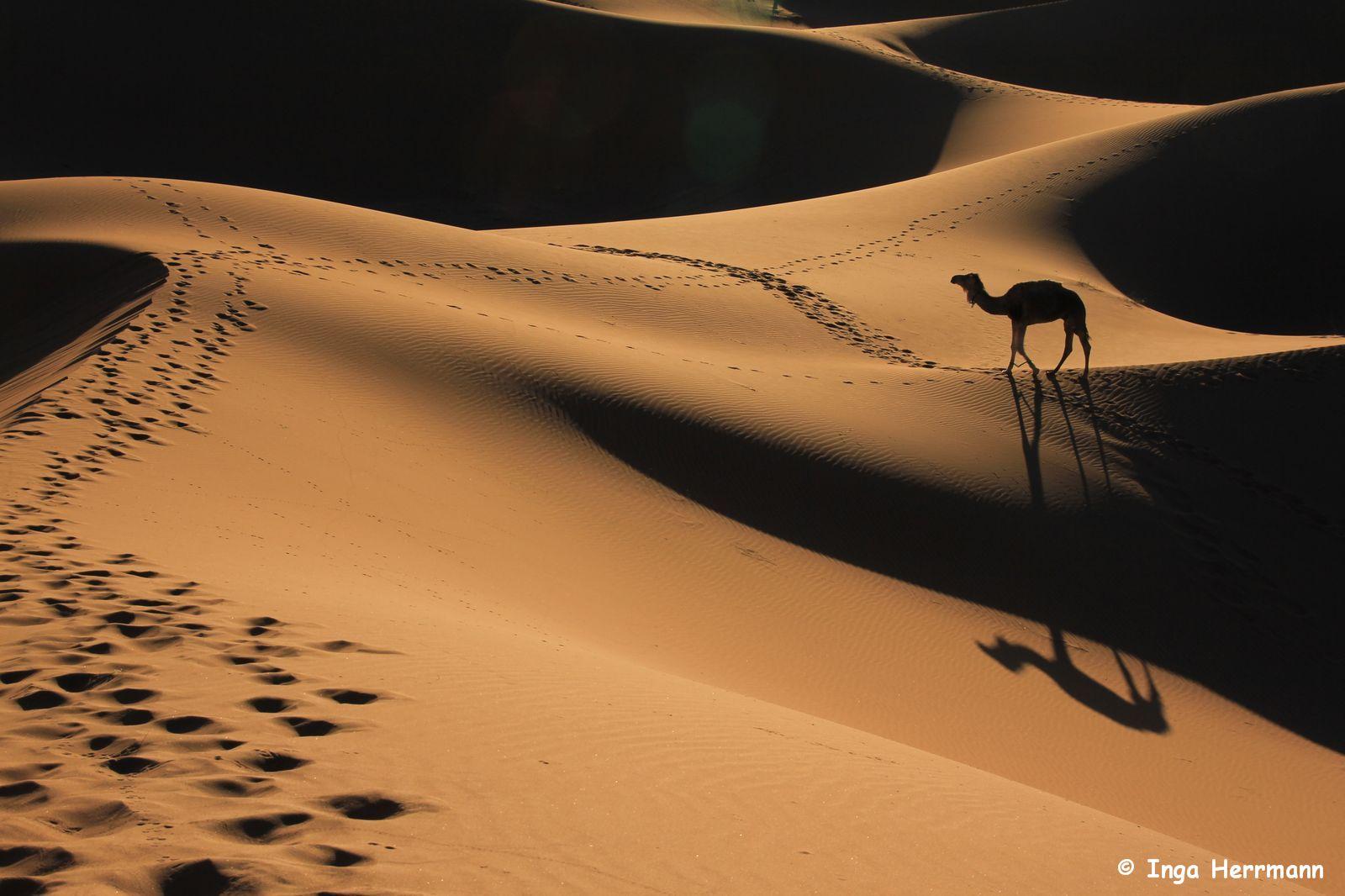 IMG_4462 - shadow